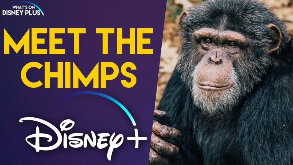 This image shows the poster of show named Meet The Chimps. ENGLISH MOVIES AND SERIES RELEASING ON OTT IN OCTOBER are showcased.