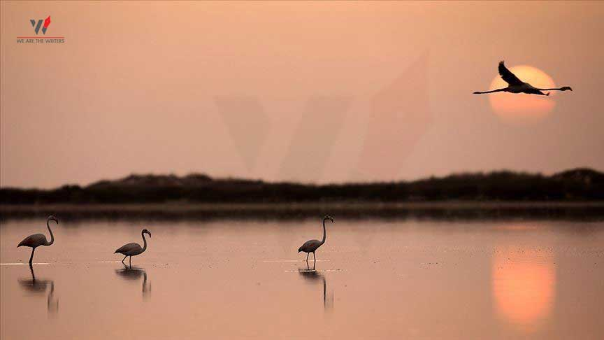 Important Days in May 2021 Holidays in May 2021 Holidays in May World Migratory Bird Day