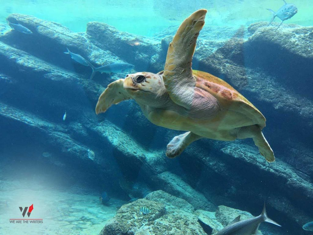 Important Days in May 2021 Holidays in May 2021 Holidays in May World Turtle Day