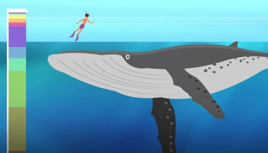 Blue whale - the largest mammal