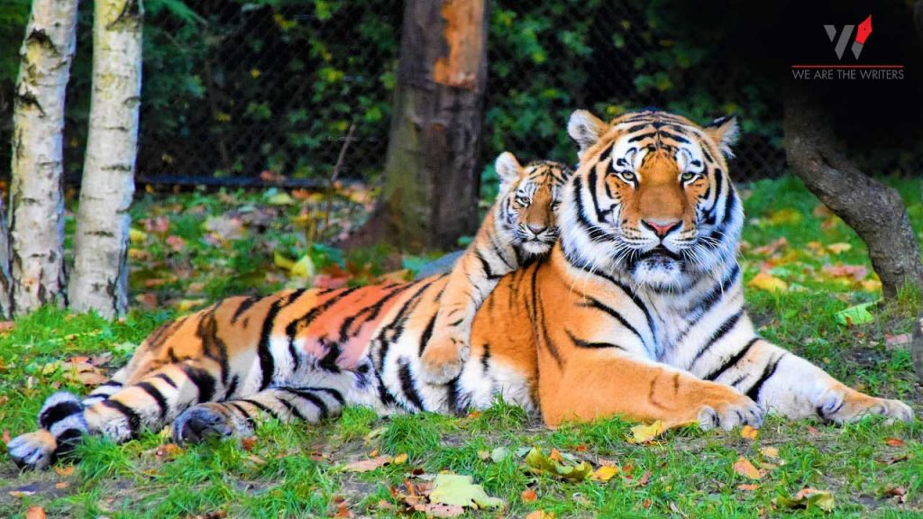 International Tiger Day - Important Days in July 2021