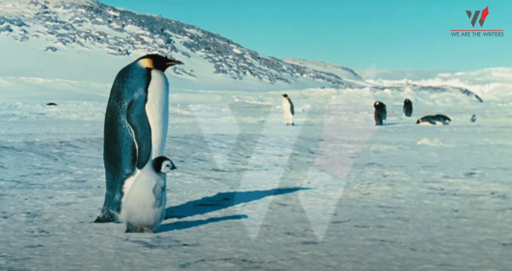 March Of The Penguins Best Documentaries